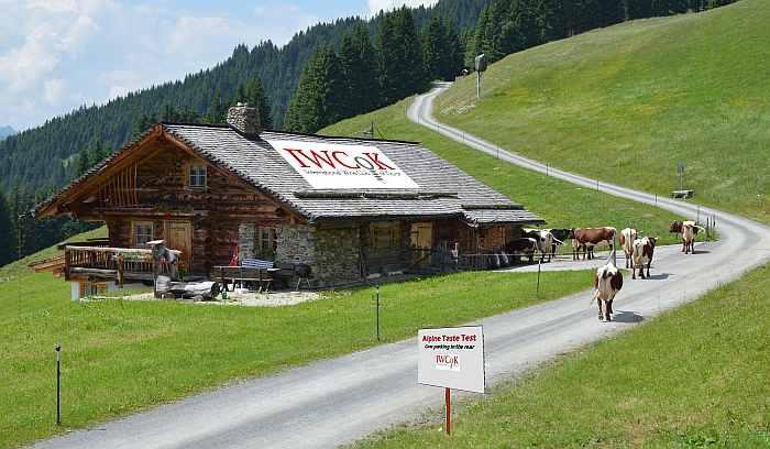 Alpine-Resort-1